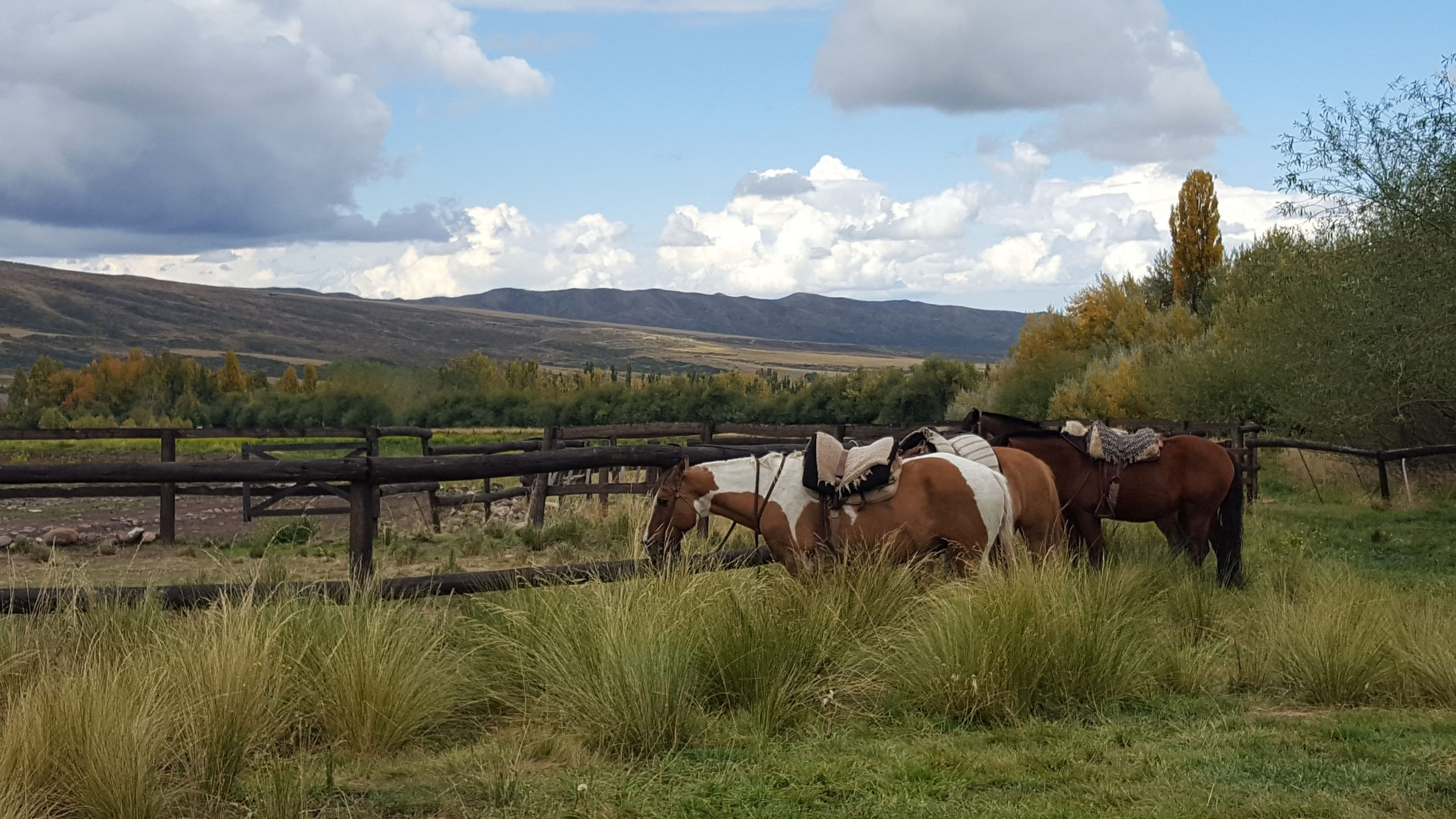 Argentinian Horse Ranch