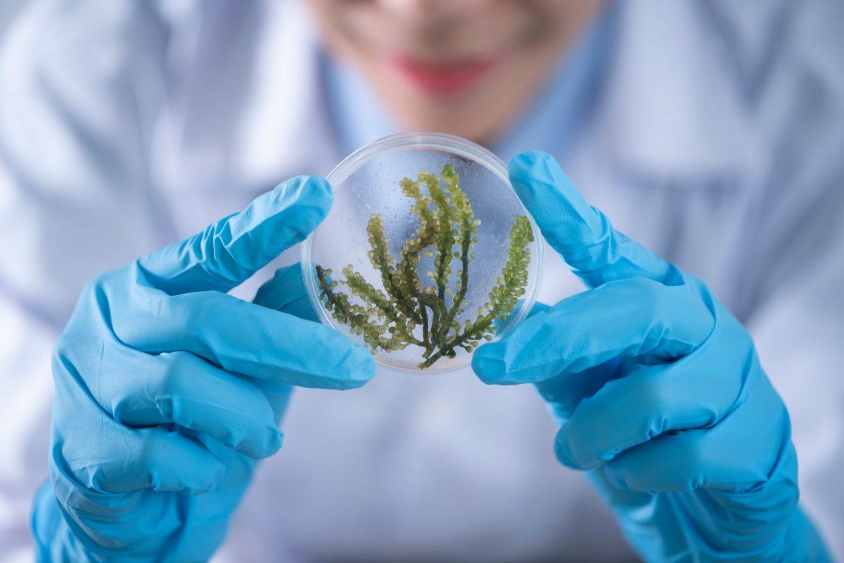 Seaweed Lab